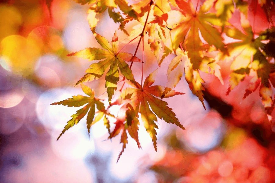 light period colours