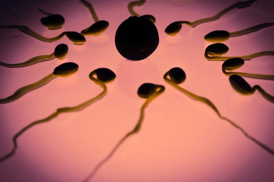 ovulation pregnancy