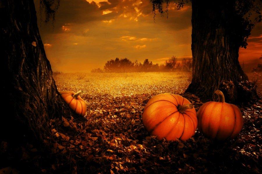 pumpkins halloween hormones