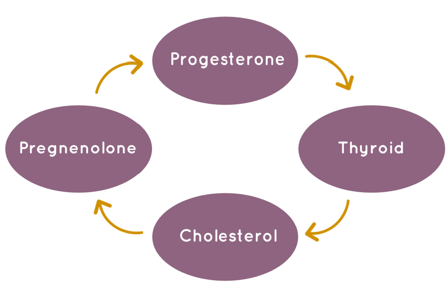 progesterone thyroid cycle